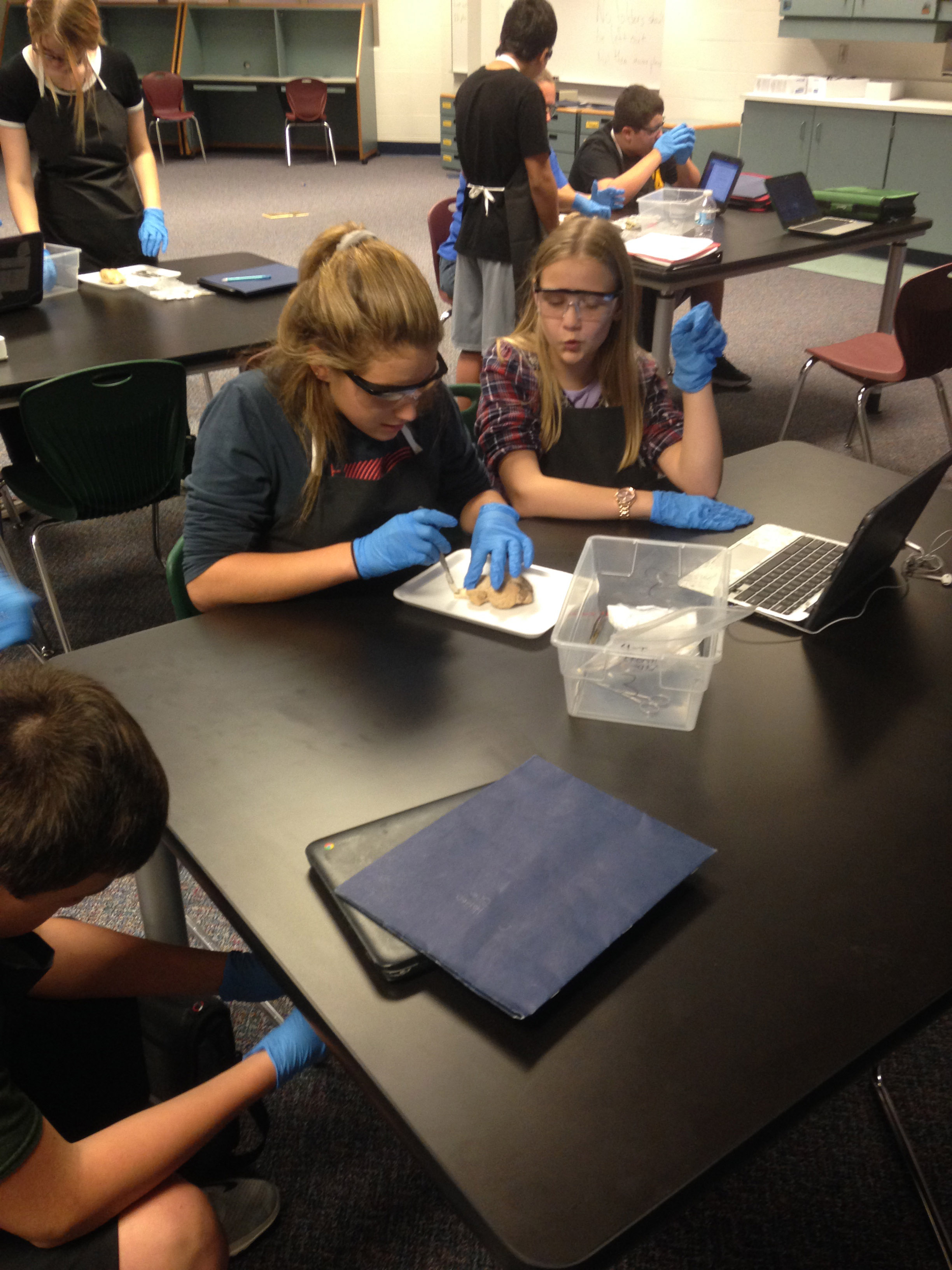 DMS Students dissecting sheep's brain